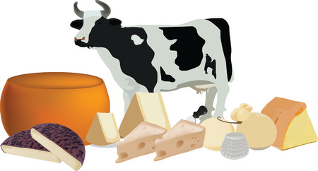 herbivore: cheese mixed cows milk cheese processing and maturing fresh and aged