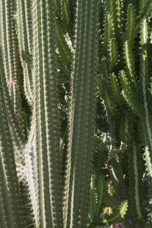 thorny: succulent thorny