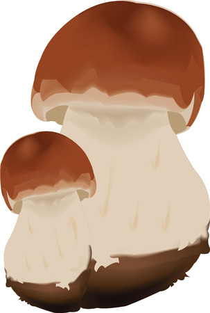 edible: couple of mushrooms of edible boletus