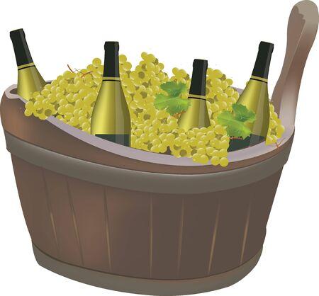grape harvest: thyme grape harvest