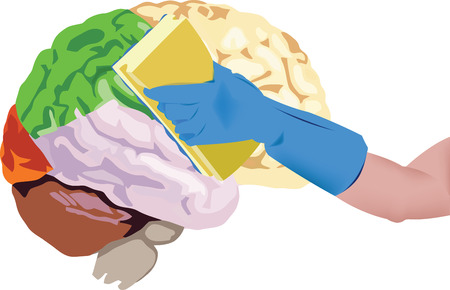 female hand with a sponge cleans the human brain