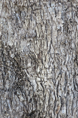 close up trunk of an olive tree