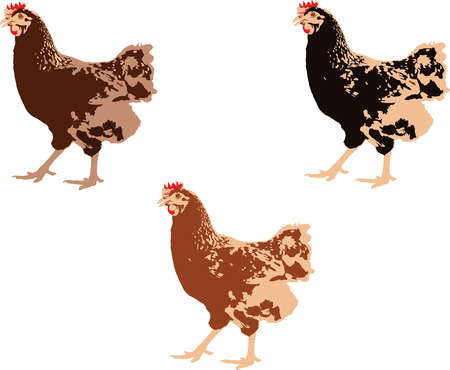 Three hens of different color illustration. Illustration