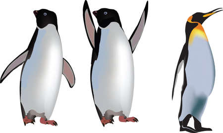 animals polar birds cold-blooded penguins