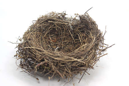 nest of dry branches shelter for birds with white background