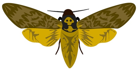 morbid: Death-head Hawkmoth