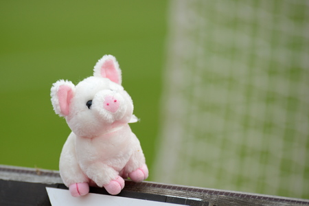 Pink cuddle toy pig on green backgroung photo