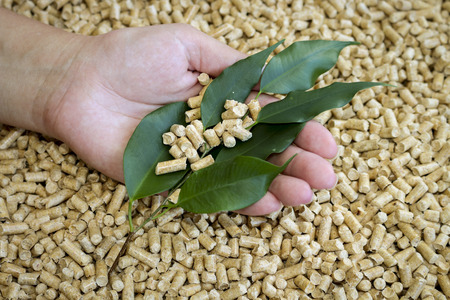 wood pellets: Wood pellets. Biofuels, an alternative biofuels from wood chips and green leaves in a female hand.