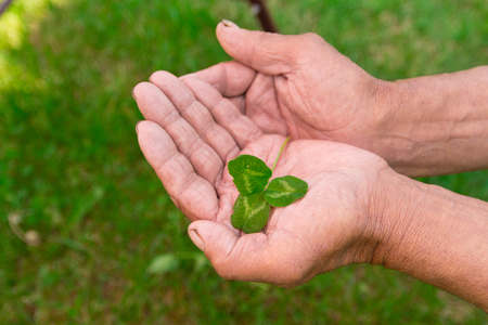 The old man holding a clover leaf