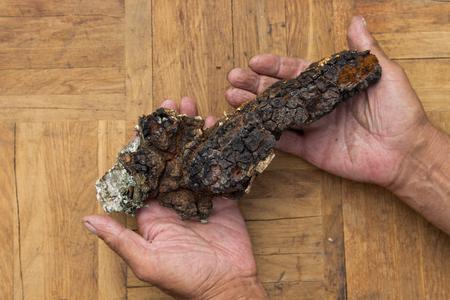 ?haga , medicinal mushroom growing on birch.  ?haga in male hands 写真素材