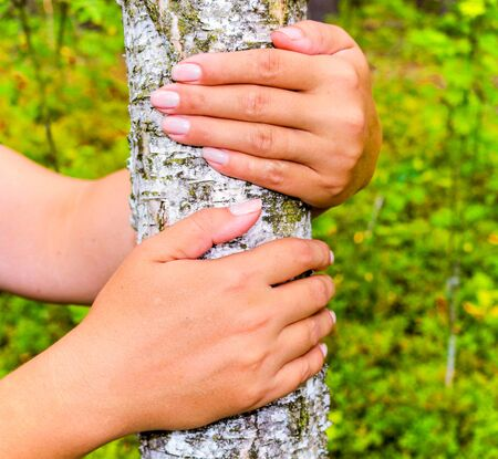 The girl hands hugging a tree trunk. To hold the birch. The concept of unity with nature. Draw strength from nature Stock Photo