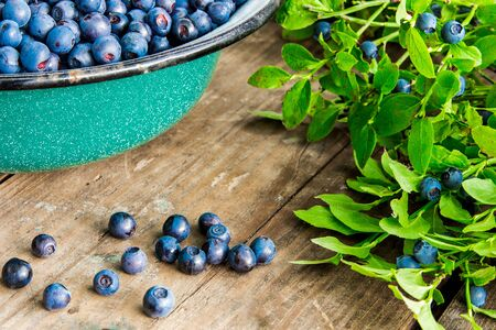 Fresh Bilberries from a bowl on old wooden table. Leaves with berries Bilberries on the Bush for background.Blueberries crumbled on the table