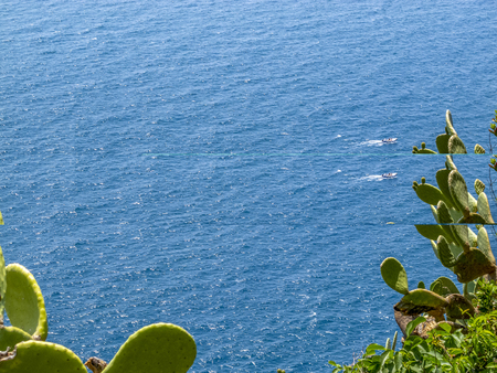 Elevated Cinque Terre Mediterranean Sea surface view with Opuntia cacti in the foreground and a boat in the distance, Cinque Terre, Liguria Italy