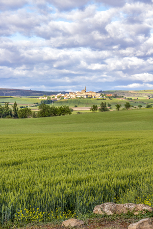 Scenic May agricultural landscape as seen from an unpaved country road on the Camino de Santiago, Way of St. James, the town of Sansol in Navarre, Spain in the distance