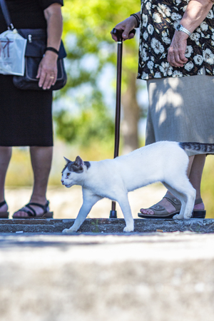 Stray tomcat walking among tourists on the shore of Lake Kerkini, Greece, blurred figures of two old women in the background Stock Photo
