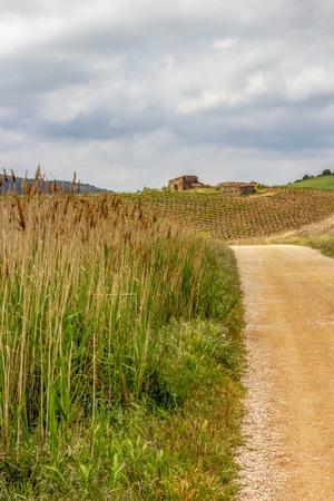 Gravel road through agricultural area on the Camino de Santiago, Way of St. James between Villamayor de Monjardin and Los Arcos in Navarre, Spain, old ruins in the distance