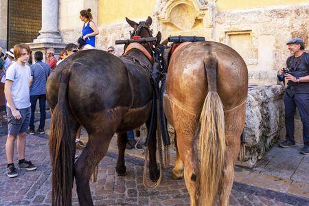 CORDOBA, SPAIN - MAY 30, 2019: Horse rump body clipping art at the procession of Feria de Cordoba, Feria de Nuestra Senora de la Salud or Cordoba Fair