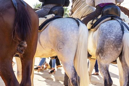 Three horse rumps at Feria de Cordoba, Feria de Nuestra Senora de la Salud or Cordoba Fair, May 2019 Stock Photo