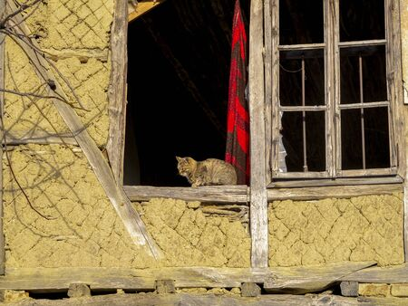 Sunlit cat on the window sill of an old abandoned half-timbered house at the Fore-Balkan village of Debnevo, Bulgaria
