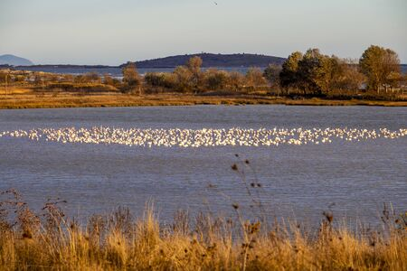 Distant view of flamingos in a lake near Paralia Mesis in Rhodope prefecture, Greece