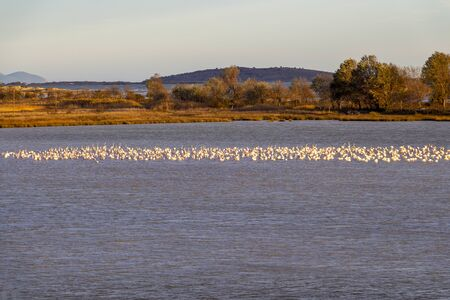 Distant view of flamingos in the middle of a lake near Paralia Mesis in Rhodope prefecture, Greece