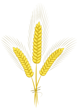 Wheat ears sketch hand drawn isolated on white background vector illustration. Ears of wheat, barley or rye.