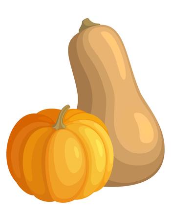 Fresh Autumn Pumpkins Illustration