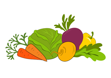 Composition with raw vegetables. Fresh vegetables vector illustration isolated on white background.