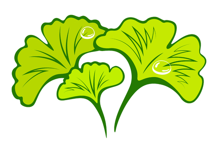 Sketch poster with branch green ginkgo biloba for medical design. Japanese herbal medicine. Ginkgo biloba leaf isolated vector illustration. Ilustracje wektorowe
