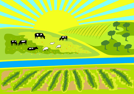 Rural landscape with vineyard, an olive grove and pasture with grazing cows and sheep. Rural sunrise landscape for farm, store or market. Milk, dairy, farm product design element.