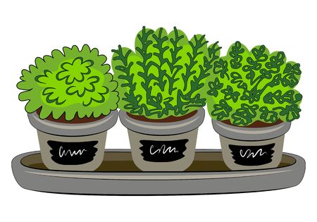 Indoor Plants In Pot Vector Illustration. Organic Fresh Micro Greens And Ñulinary Herbs. Year-Round Indoor Vegetable Garden. Growing Microgreens At Home. Vetores