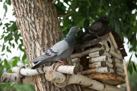 pigeon holes: Pigeon feeder birdhouse nesting box dove park Stock Photo