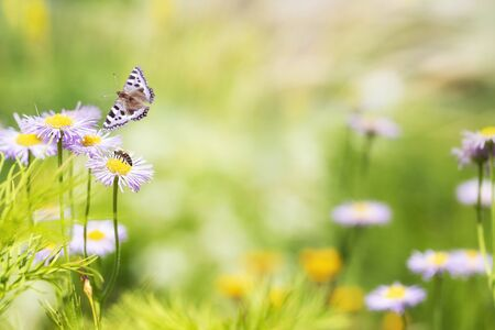 Wild field flowers with butterfly in a meadow in nature with rays of sunlight at summer or spring time. Macro of flower and butterfly background. Soft focus, wide panoramic banner