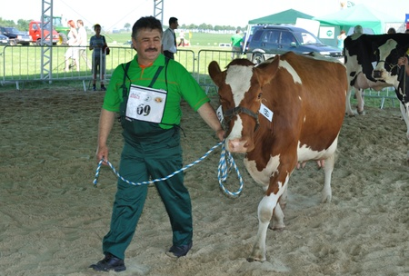 Plonsk, Poland - June 12, 2010 - Dairy cow with their owner compete at a cattle show, during the 11th Masovian Agriculture Days. Stock Photo - 9272040