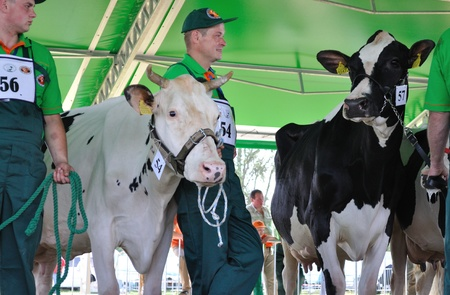Plonsk, Poland - June 12, 2010 - Dairy cows with their owners compete at a cattle show, during the 11th Masovian Agriculture Days. Stock Photo - 9272039