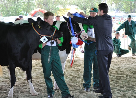 Plonsk, Poland - June 12, 2010 - Dairy cows with their owners compete at a cattle show, during the 11th Masovian Agriculture Days. Stock Photo - 9272073