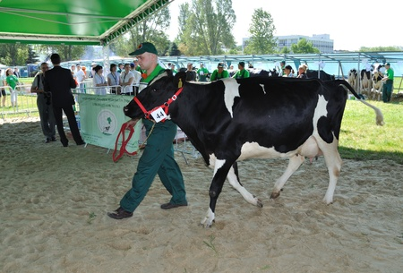 Plonsk, Poland - June 12, 2010 - Dairy cow with their owner compete at a cattle show, during the 11th Masovian Agriculture Days. Stock Photo - 9272042