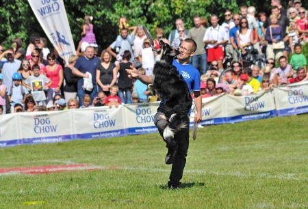 Warsaw, Poland - September 4, 2011 - Unidentified participant playing dogfrisbee freestyle at the Dog Chow Disc Cup.