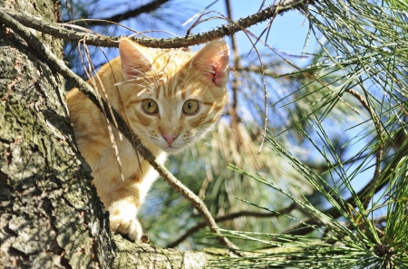 Cat in a tree  Stock Photo - 15912636