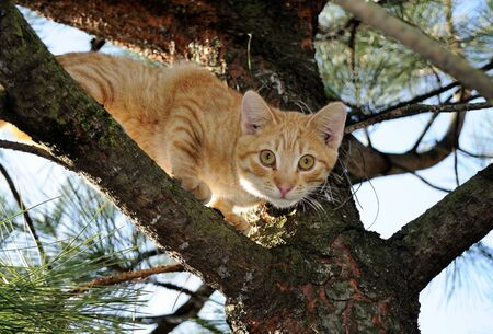 Cat in a tree Stock Photo - 15912637
