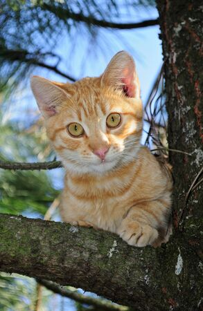 Cat in a tree  Stock Photo - 15912633