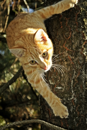 Cat in a tree  Stock Photo - 15912635