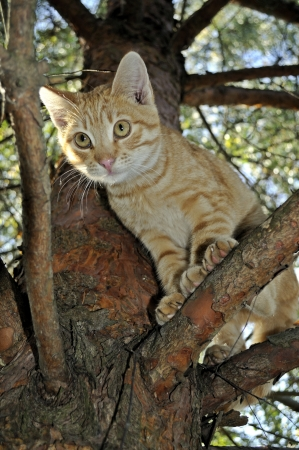 Cat in a tree  Stock Photo - 15912638