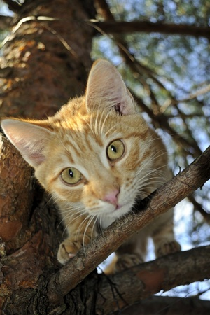 Cat in a tree  Stock Photo - 15912632