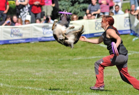 Warsaw, Poland - September 4, 2011 - Jajina Malinska playing dogfrisbee freestyle at the Dog Chow Disc Cup.