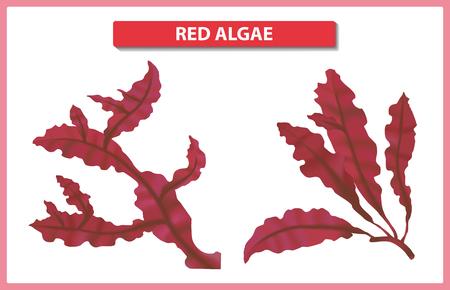 Underwater red algae on white background. Seaweed elements vector illustration.