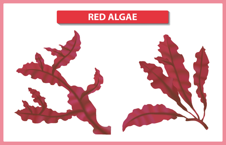Underwater red algae on white background. Seaweed elements vector illustration.
