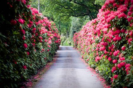 Ein buntes Stra�e mit Rhododendron Lizenzfreie Bilder