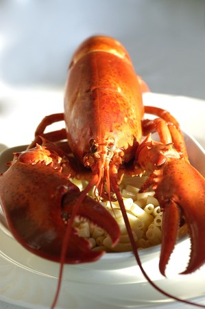Whole cooked lobster over a bed of macaroni pasta in a white bowl Stock Photo
