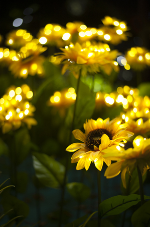 Sunflowers brighten up during a night light-up.